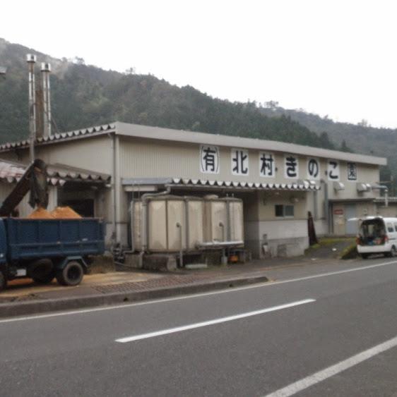kitamurakinoko001