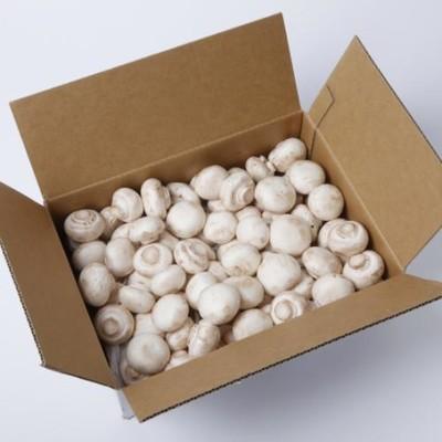 ホワイトマッシュルームB品 2kg箱   【岡山】 mn